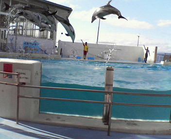 のとじま水族館イルカショー